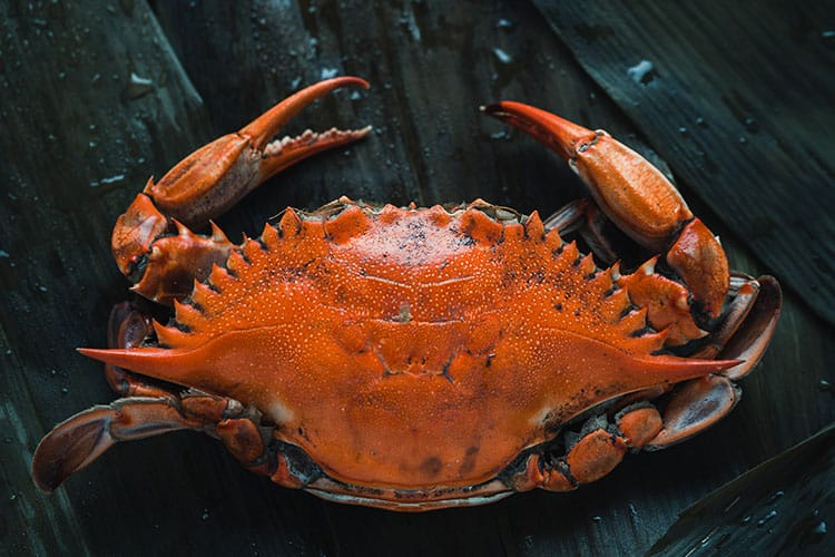 how-to-steam-crabs