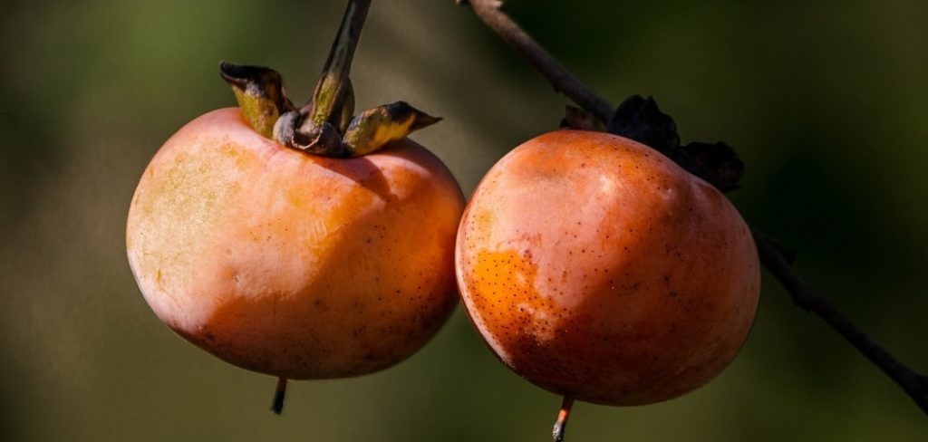 What Does Persimmon Taste Like