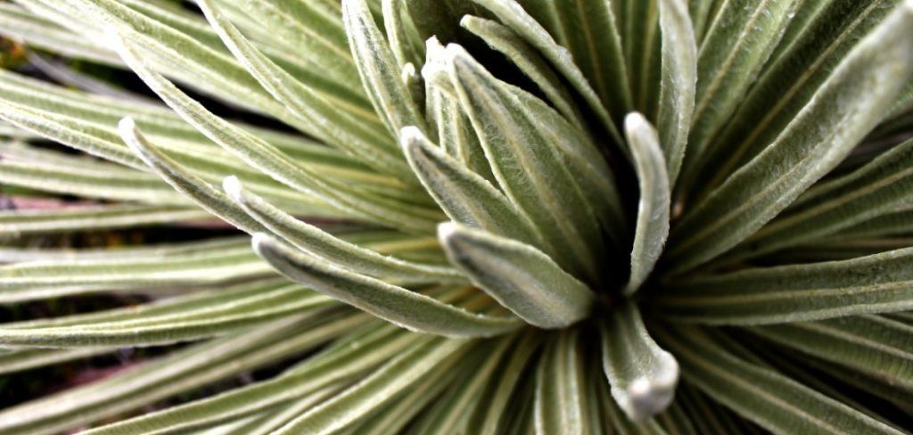 The Nutritional Benefits of Yucca