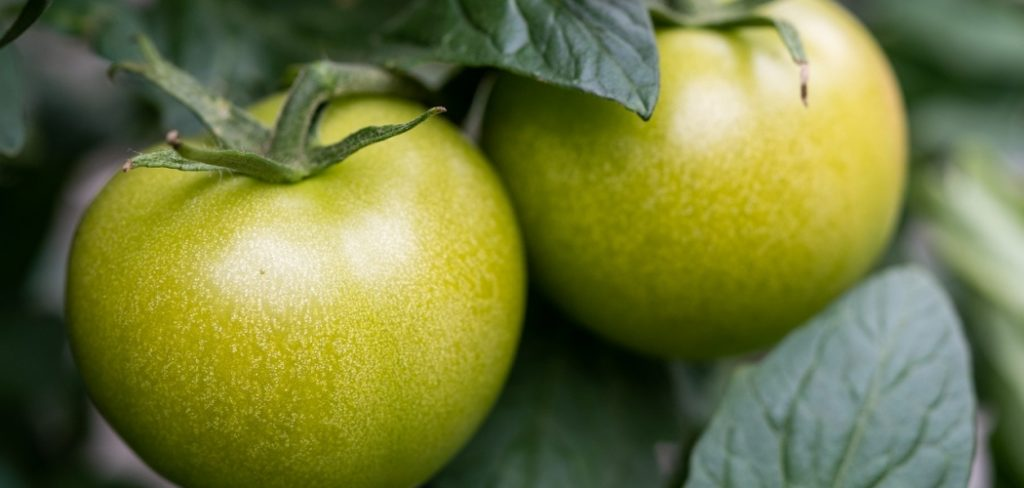 The Juicy Benefits of Green Tomatoes